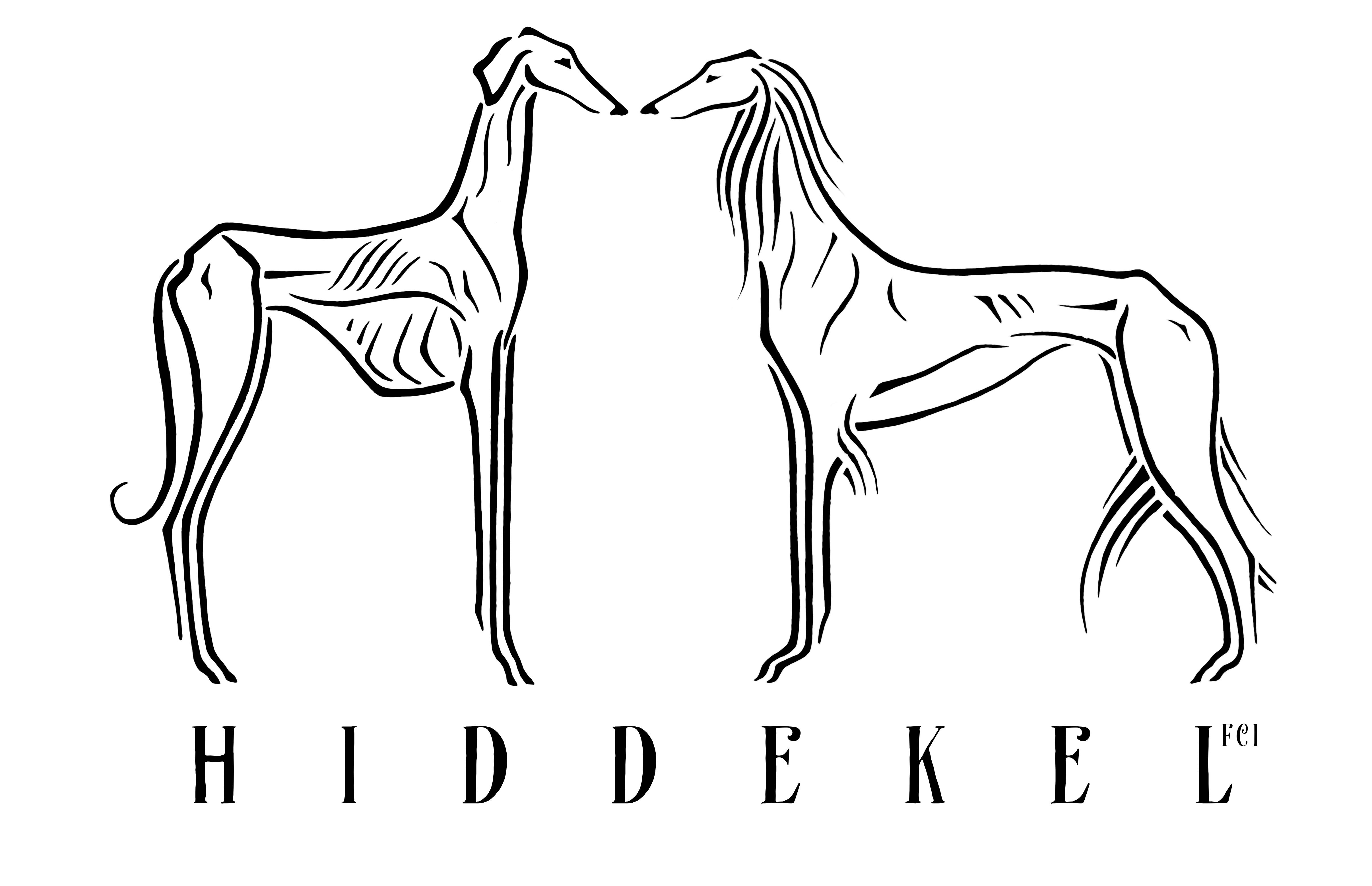 Hiddekel FCI - Azawakh & Saluki kennel , hodowla chartów Chart Afrykański i Chart Perski